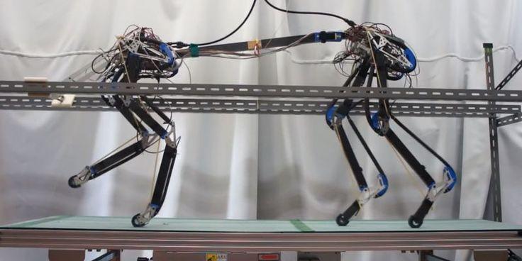 Первые шаги четвероногого робота Pneupard (видео) http://telegraf.com.ua/tehnologii/1280289-pervyie-shagi-chetveronogogo-robota-pneupard-video.html