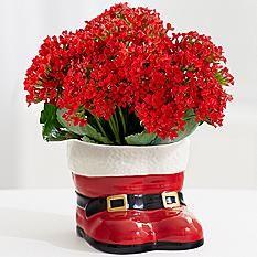 Santa S Boots Holidays Pinterest Houseplants Houseplant And Planters