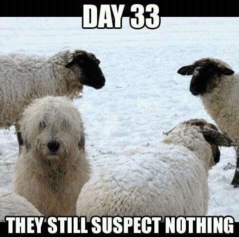 Day 33 - they still suspect nothing