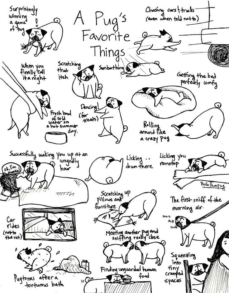 A Pug's Favorite Things, Part II - if you are crazy for pugs, you MUST follow Funaek - she is soooo talented & her pug drawings are spot-on!