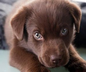 100 Unique female dog names