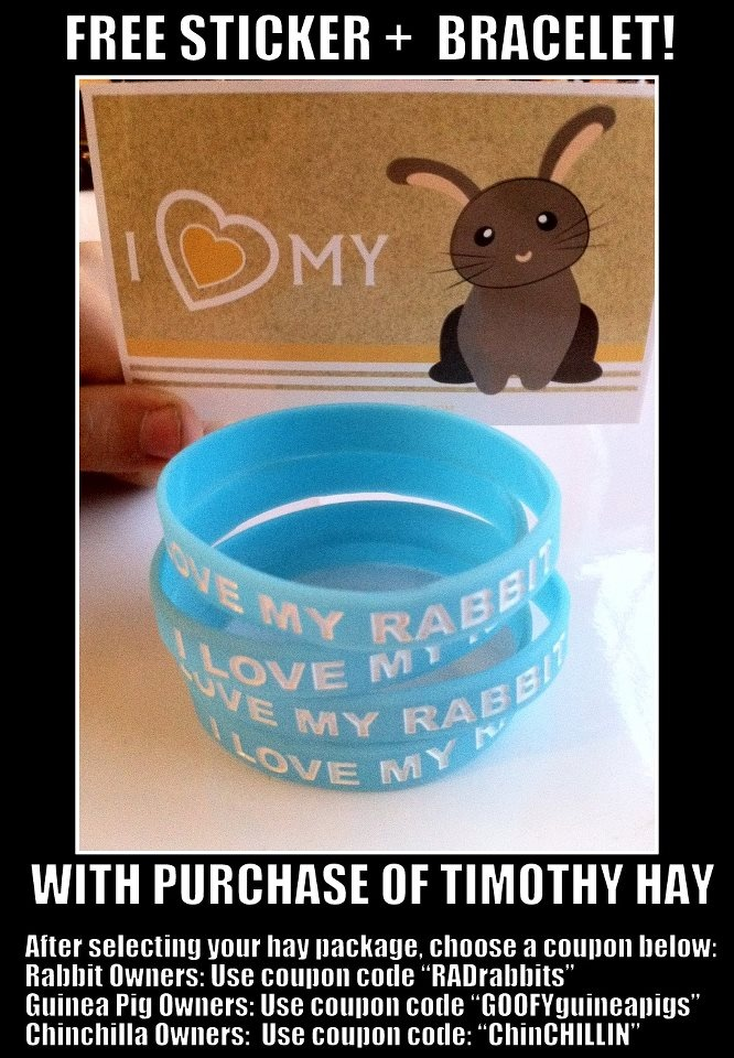 Free Rabbit Sticker And Rabbit Bracelet With Purchase Of Timothy