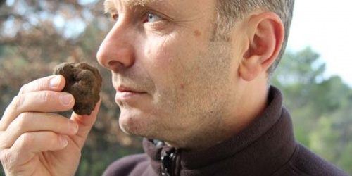 Recipes | Mirabeau Wine - Hunting for truffles with flies, not pigs!