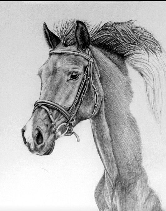 A beautiful horse drawing in pencil ♡ | wood burning ...