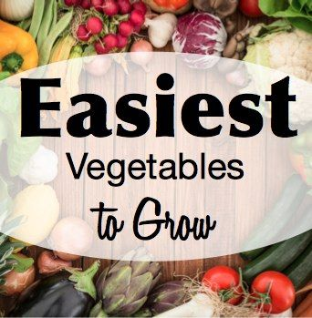 Best 25+ Easy Vegetables To Grow Ideas On Pinterest | Easy Grow Vegetables,  Easy To Grow Vegetables And Vegetables To Grow