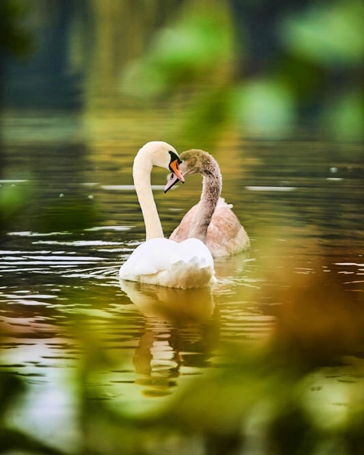 "23 Likes, 2 Comments - Sarah Seymour (@loveabsoluteskincare) on Instagram: ""Image @tagsnap #wildcrafted#love#organic#fruit#flowers#naturalskincare#swan #naturelovers #lakes…"""