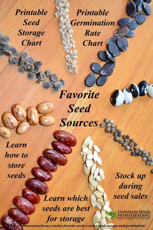 Learn which seeds are best for stocking up. GMO free seed sources, proper seed storage, expected seed germination rates after storage. Easy germination test