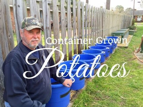 HD How To Grow Potatoes In Containers (Part 1 of 3) - Subscription FREE - YouTube