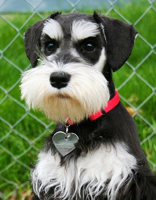 5 Most Kid Friendly Dog Breeds