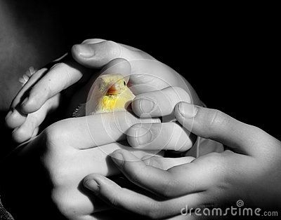 Hands of children holding a yellow canary
