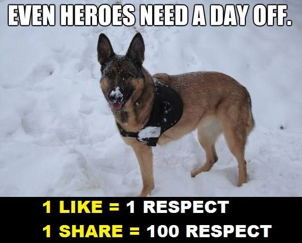 """Lucca, the military working dog who lost her leg while on morning patrol in Afghanistan, is currently enjoying her retirement in Finland. She will be riding our """"Canines with Courage"""" Rose Parade float, which is honoring military working dogs throughout the country. Give him a LIKE and pin it                                                                                                                                                      More"""