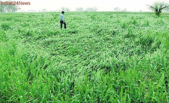Circle rates of agricultural land to be based on location