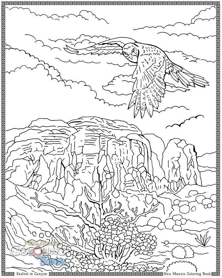 Kestrel In Canyon Coloring Book Pages Coloring Pages Coloring Books