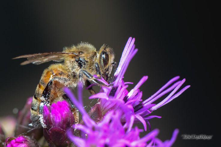 Bee by Eric Deschênes