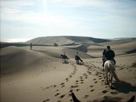 Dunas de Concón   Ecosistema único por su particular flora y fauna, algunos investigadores lo consideran el segmento más austral del Desierto Florido. Un excelente paseo a pie y bajando en deslizadores leer más >