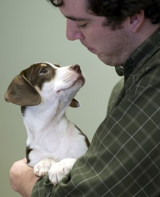 Law student + puppy. Shelter dogs and volunteers come to GMU as a de-stressing program.