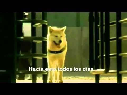 La Verdadera historia de Hachiko (El video Mas Triste del Mundo)