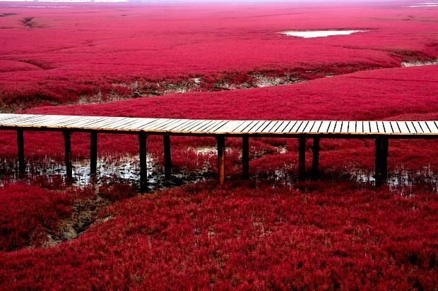 The Red Beach is located in the Liaohe River Delta, about 30 kilometer southwest of Panjin City in China. The beach gets its name from its appearance, which is caused by a type of sea weed that flourishes in the saline-alkali soil. The weed that start growing during April or May remains green during the summer. In autumn, this plant turns flaming red, which creates a rare red sea landscape. Most of the Red Beach is a nature reserve and closed to the public. Only a small, remote, section is…