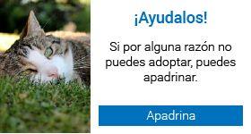 Inicio - Sociedad Protectora de Animales (Medellín)