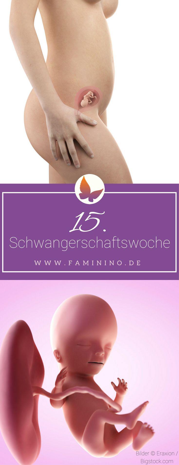 15. SSW (Schwangerschaftswoche)
