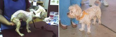 Συγκινητικές φωτογραφίες σκύλων πριν και μετά την υιοθεσία! ~ Lil animals