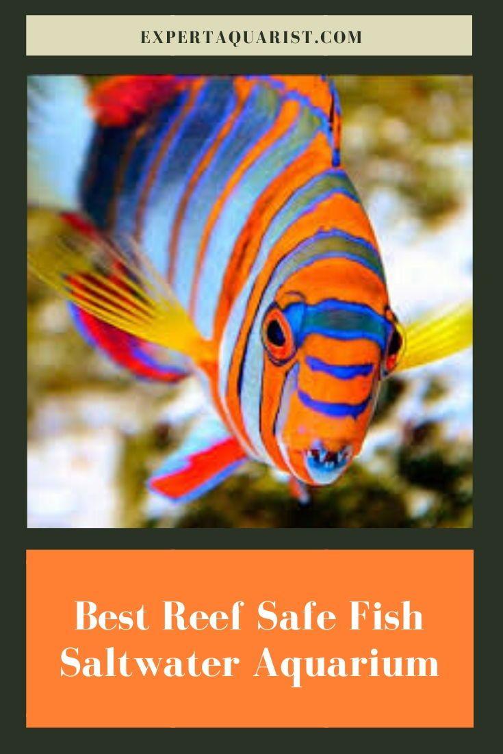 Top 10 Best Reef Safe Fish For Your Saltwater Aquarium In 2020 Reef Safe Fish Saltwater Aquarium Fish Saltwater Aquarium