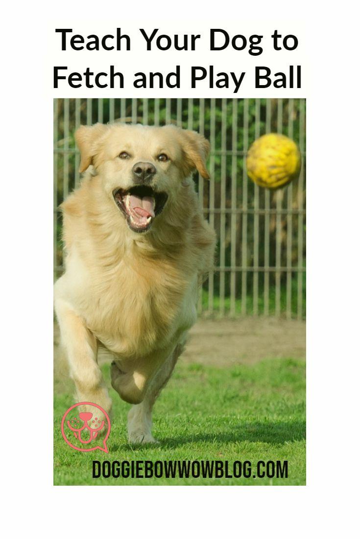 Exercise And Bonding Combined Your Dog Dogs Dog Training