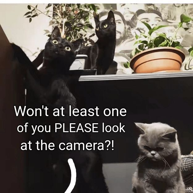 After hours of trying to take a new profile picture, I'm pretty sure my cats are doing this on purpose.