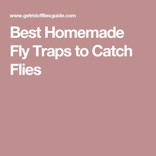 Best Homemade Fly Traps to Catch Flies