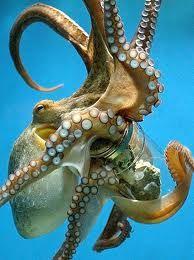 Scoperte tentacolari: la piovra - Parliamo di Cucina