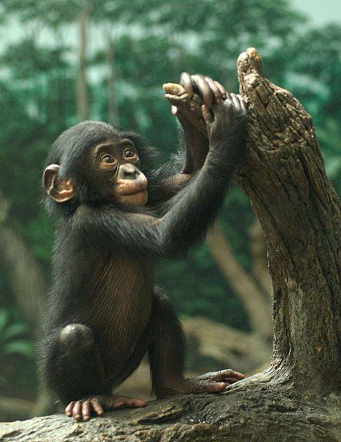 58 best images about chimps test pilot on Pinterest ...