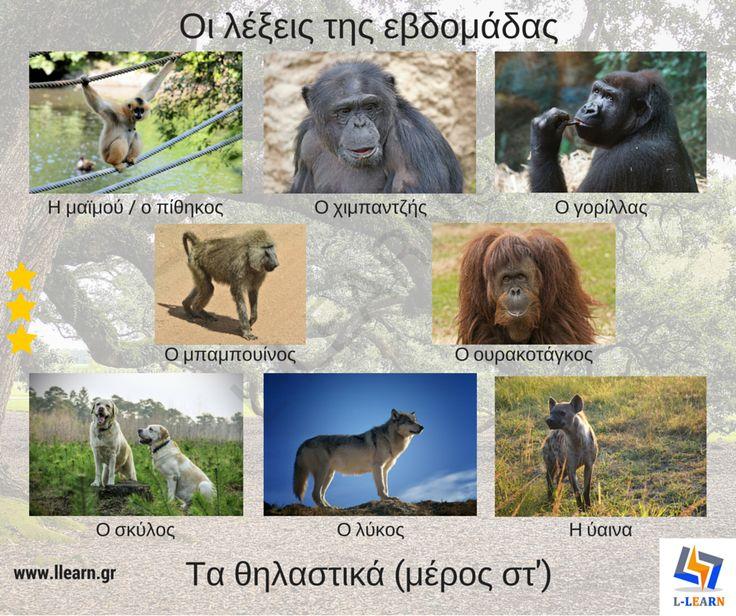 Mammals (part 6). Θηλαστικά (μέρος στ'). #λέξεις #Ελληνικά #ελληνική #γλώσσα #λεξιλόγιο #Greek #words #Greek #language #vocabulary #LLEARN