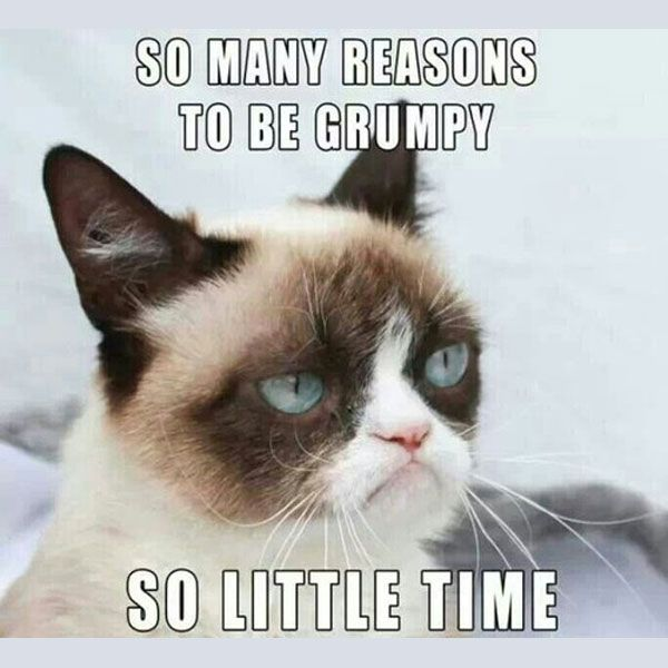 46 best ideas about grumpy cat on pinterest grumpy cat