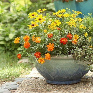 great colorful container !: Gardens Ideas, Flowers Gardens, Container Gardens, Mothers Day, Yelloworang Planters, Pretty Flowers, Colors Schemes, Container Gardening, Bright Colors