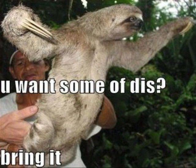 Best Sloth Memes: Best Sloth Memes