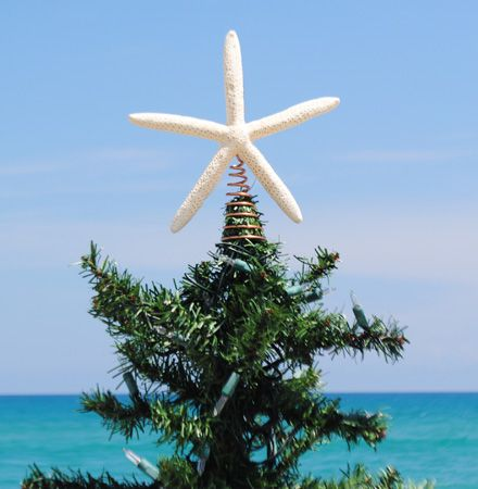 tree topperTrees Toppers, Fingers Starfish, Beachy Christmas, Starfish Trees, Christmas Decor, Florida Christmas, Christmas Trees, Coastal Christmas, Christmas Stars