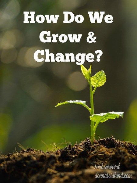 """""""How Do We Grow & Change?"""" + LINKUP - A couple of weeks ago I wrote about prayer and Bible study and how they are """"The 2 Essential Means of Christian Growth."""" This week I want to talk more about how those two means work themselves out on a practical level."""