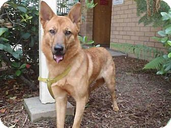 Los Angeles, CA - German Shepherd Dog/Chow Chow Mix. Meet XENA, a dog for adoption. http://www.adoptapet.com/pet/15469669-los-angeles-california-german-shepherd-dog-mix