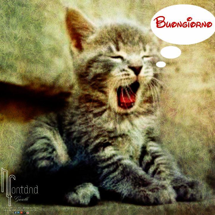 buongiorno gattino che sbadiglia