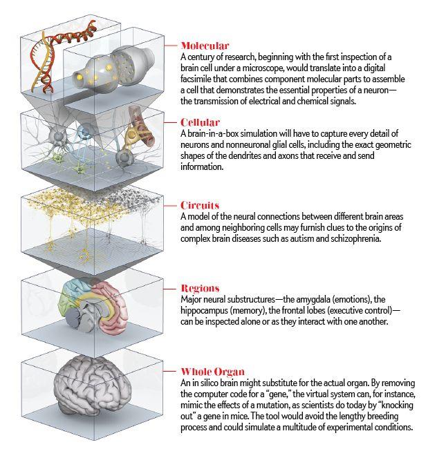 A Working Brain Model