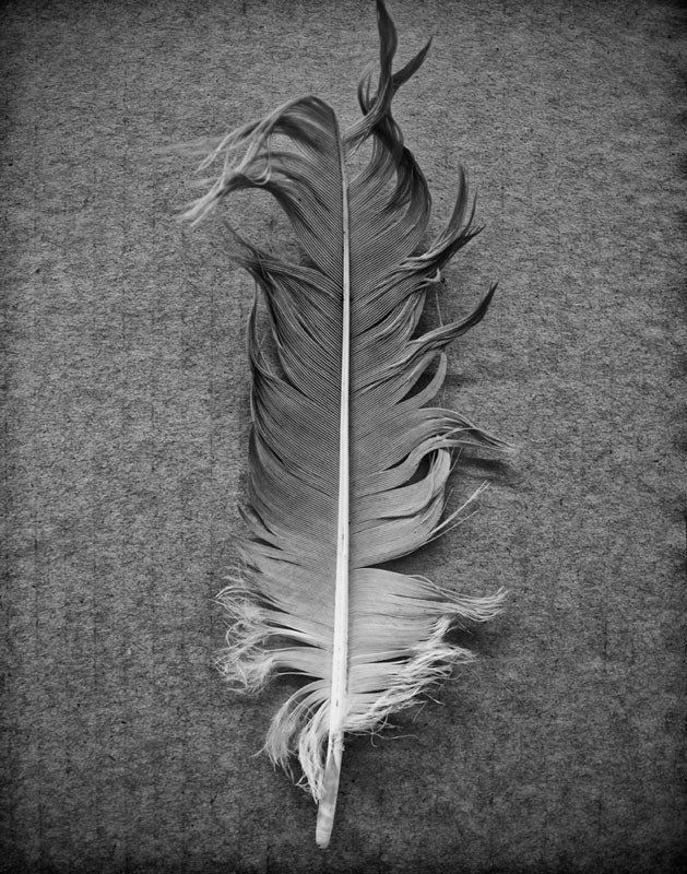 Quiet, peaceful, meditational black and white photograph of a found goose feather photographed on a background of cardboard. Standard Prints: - Printed on real silver-based Resin Coated (RC) photo pap