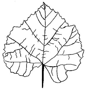Areti's Place: Πατρόν : Φθινοπωρινά φύλλα