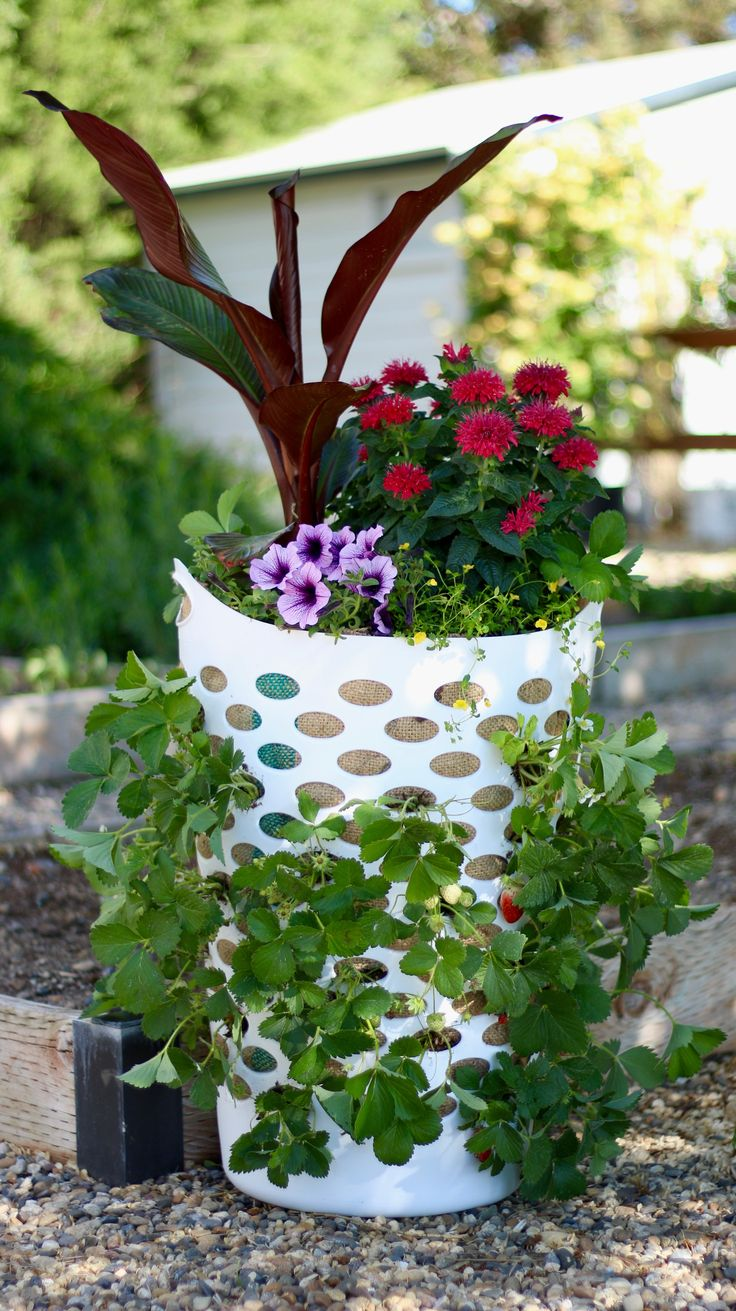 Urban gardening ideas containers - Find This Pin And More On Garden Advice Videos