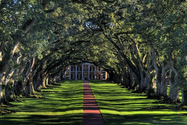 Oak Alley, one of the famous and probably most pictured sugar cane  plantation in southern Louisiana, 1 hour from Baton Rouge