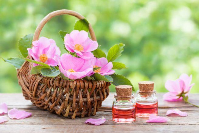 Olio di rosa mosqueta: le proprietà e come usarlo per il benessere della pelle - Donnaclick