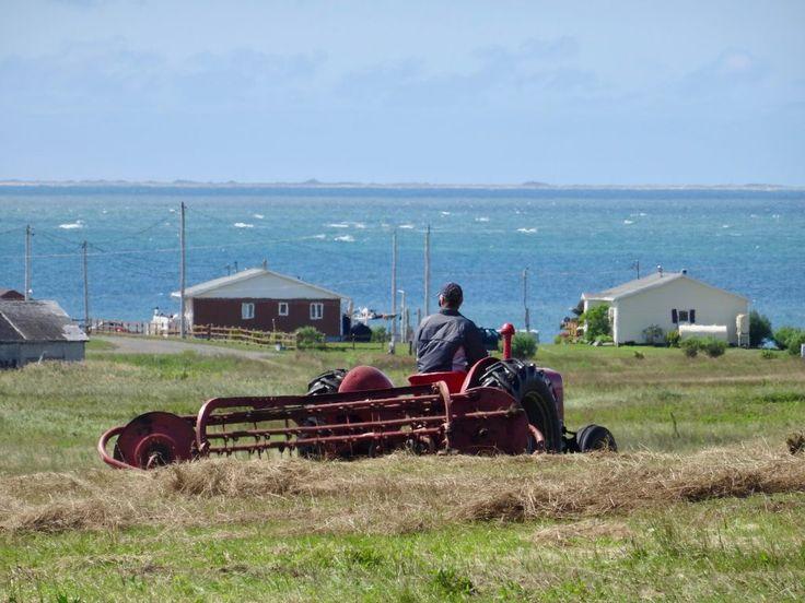 Traditional farming on Entry Island