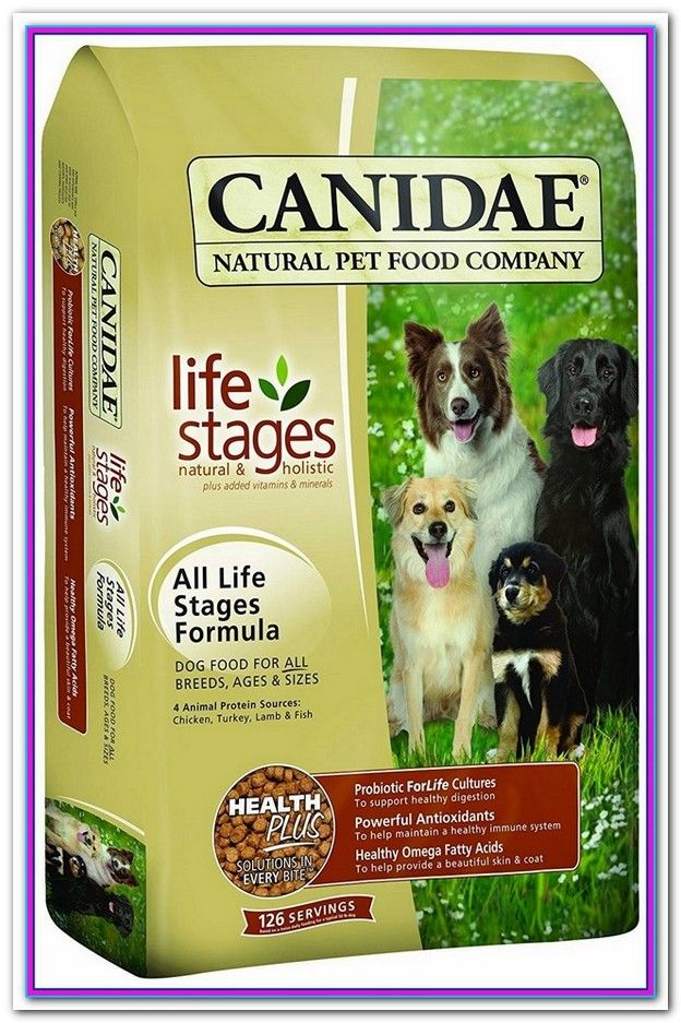 Best Dry Dog Foods Canada Healthy Dog Food Brands Healthy Dog