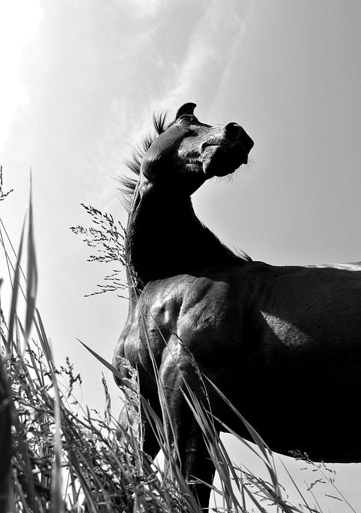 This is just a cool picture.  The angle is awesome, and I mean come on, who taught the horse to pose like that?