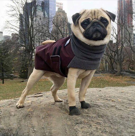 PUG Winter Dog Coat, Winter Coat, Dog Clothing, Pug