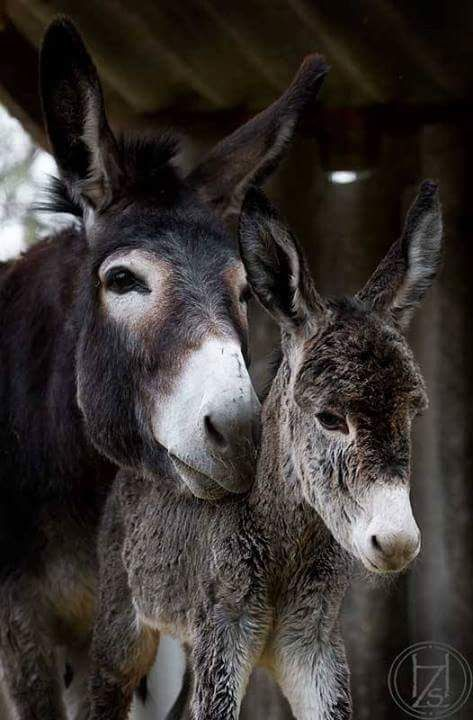 Sandra McSpadden Barton ~ Only Donkeys